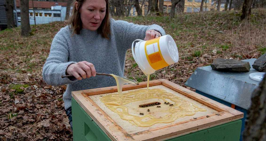 Det er mandag morgen midt i april – overskyet og småkaldt, og lite summing i kubene. Derfor må Linda Kristiansen, som har birøkt som hobby og eier en av kubene, hjelpe dem i gang med litt mat – honning, selvsagt.