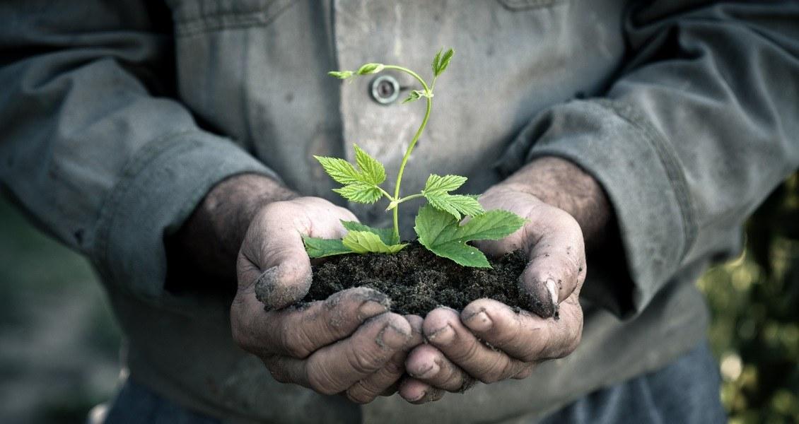 Vern om skaperverket må praktiseres i det store - og i det små...